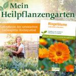 Ringelblume – Mein Heilpflanzengarten